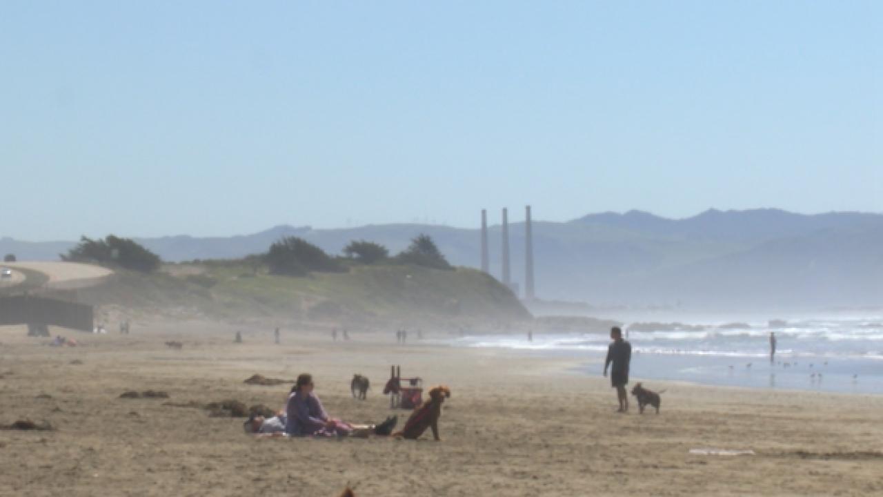 Dog Beach in Morro Bay