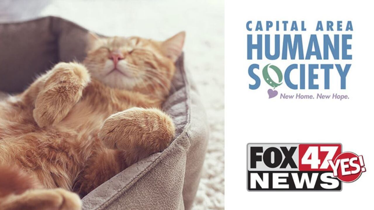 humane society & FOX 47 News