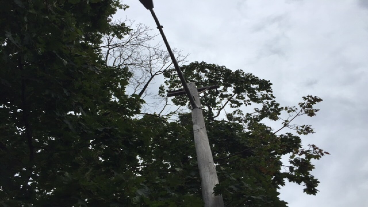 PHOTOS: Cleveland cat rescued from utility pole
