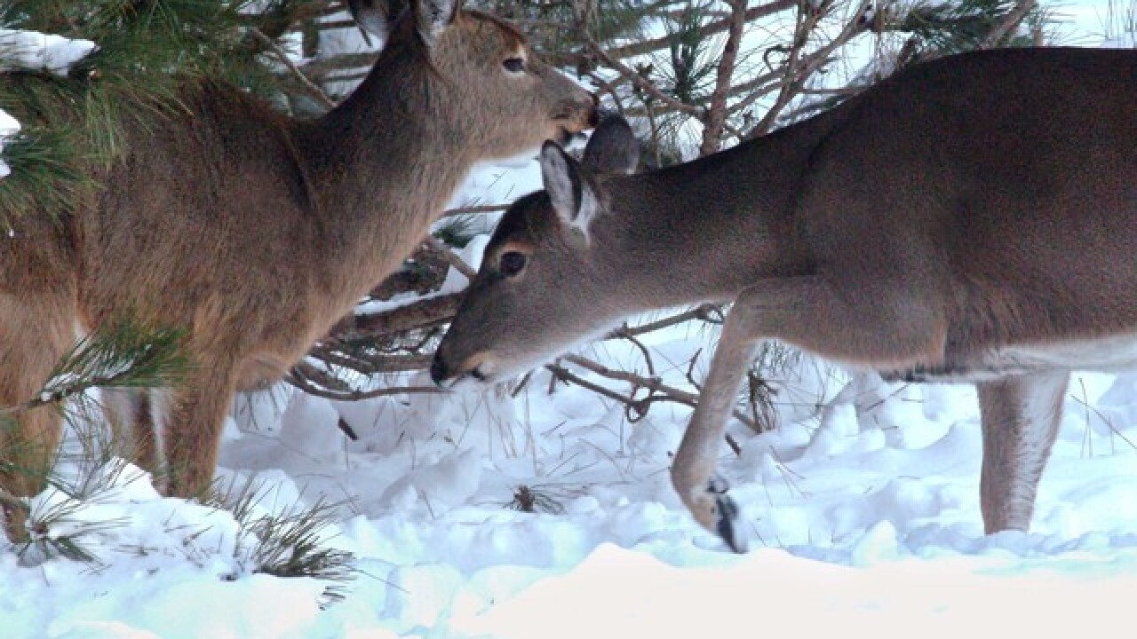 Colorado officials increase limit for licenses on some big game