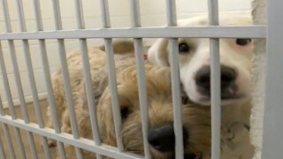 SATURDAY: All MCACC pets up for FREE adoption