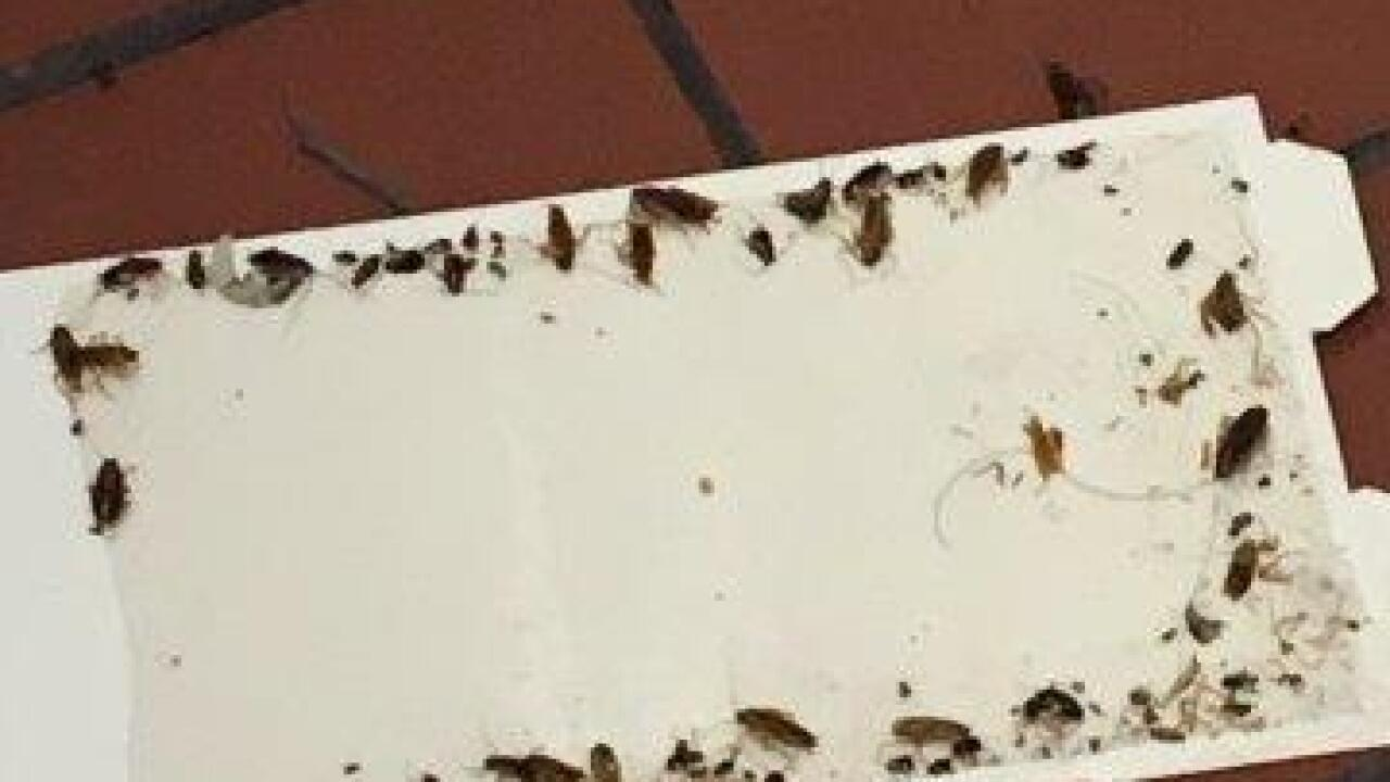 Cockroaches and ice cream on Dirty Dining