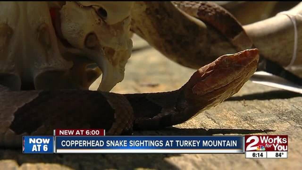 Copperhead snake sightings at Turkey Mountain