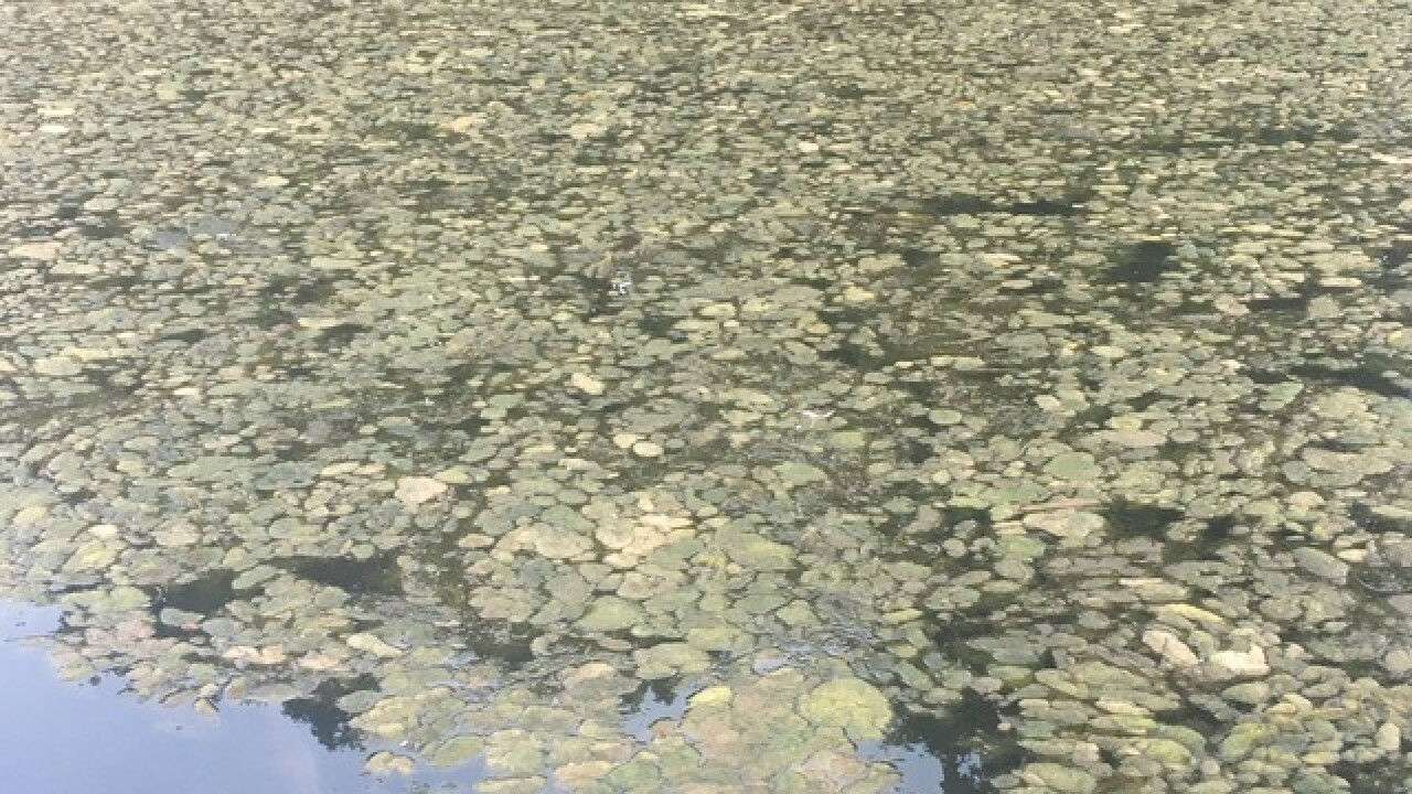 Geist Reservoir: A mix of algae and aesthetic