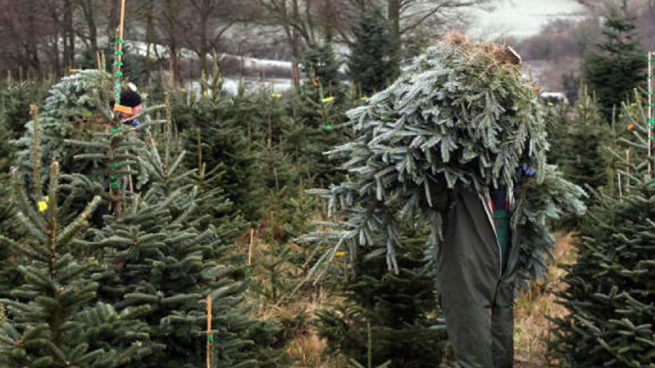 Christmas Tree Recycling Las Vegas