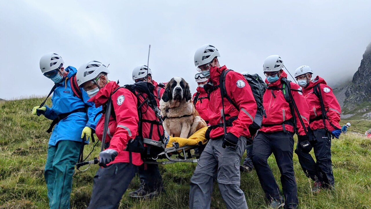 Role reversal: St. Bernard rescued from mountain peak