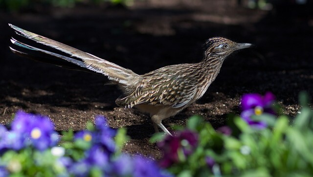 Birds of the southwest, in all their feathered glory