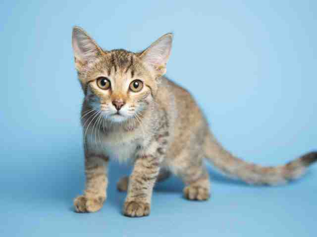 Adoptable pets from Arizona Humane Society and Maricopa County Animal Care (8/15)