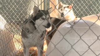 Bitter Root Humane Association working to find homes for rescued huskies