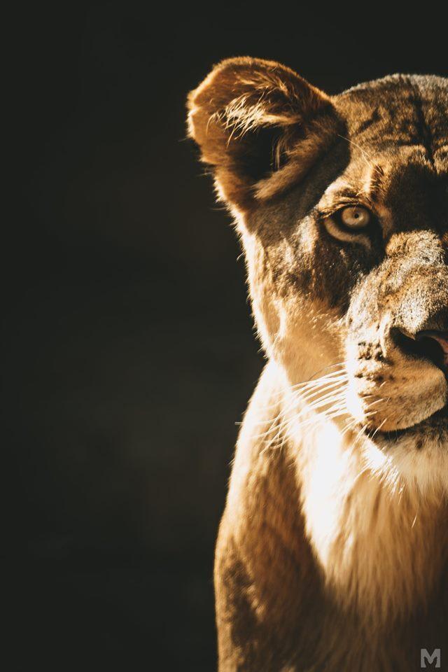 Lion Cub_11_Molly McCormick.jpg