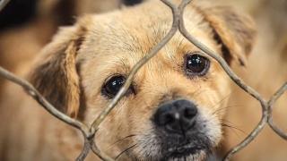 Dog CDC ban