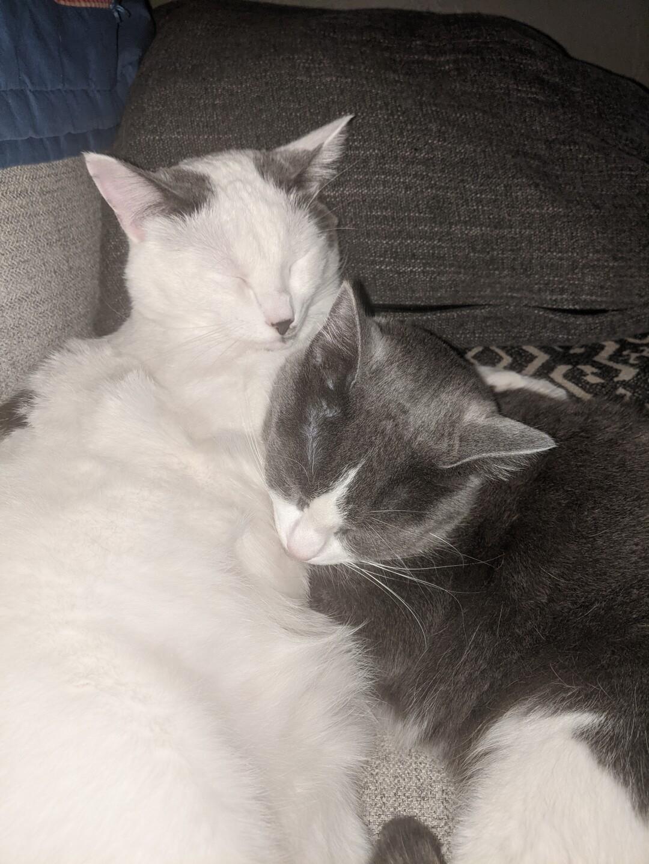 Felix and Sarah