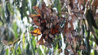 Butterfly grove