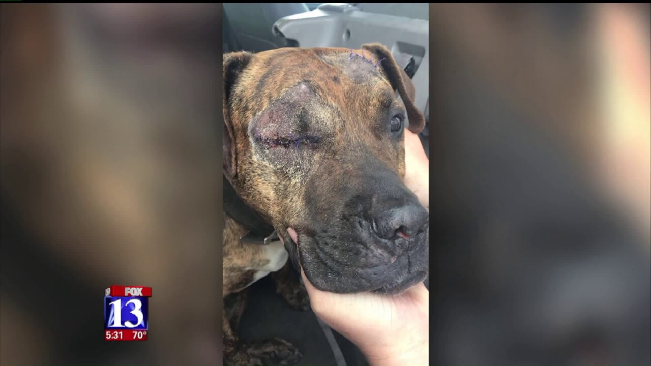 Ogden woman pleads for help after two dogs attacked inbackyard