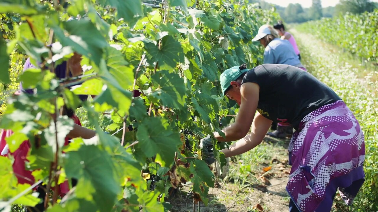 Winemakers taking matters into their own hands to save harvests from wildfires