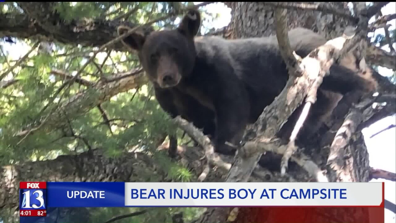 Bear euthanized after boy scratched during Boy Scout campout in Utah County