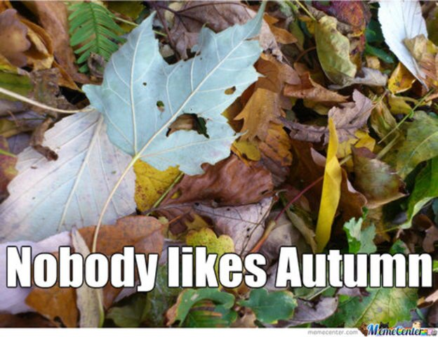 Funny memes to celebrate fall