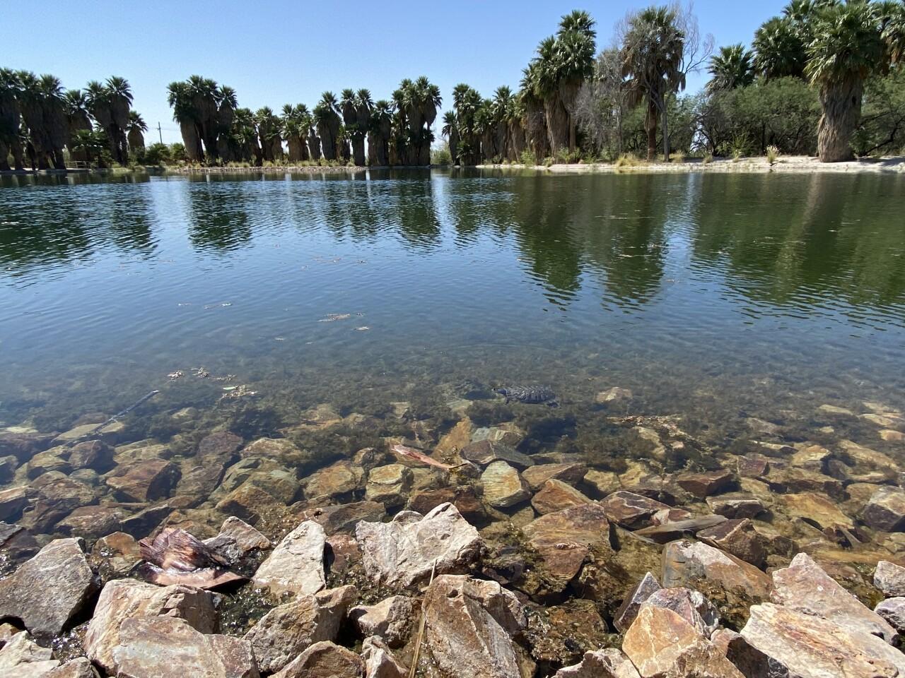 Agua Caliente main pond