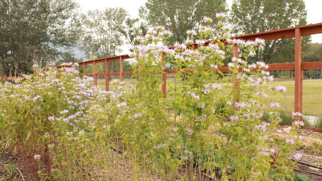 ancestral garden 8.jpeg