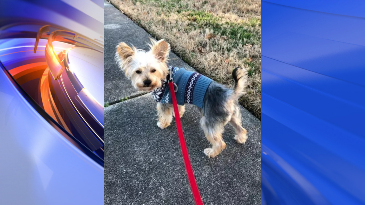 Hampton woman offers reward after losing emotional support dog during crash