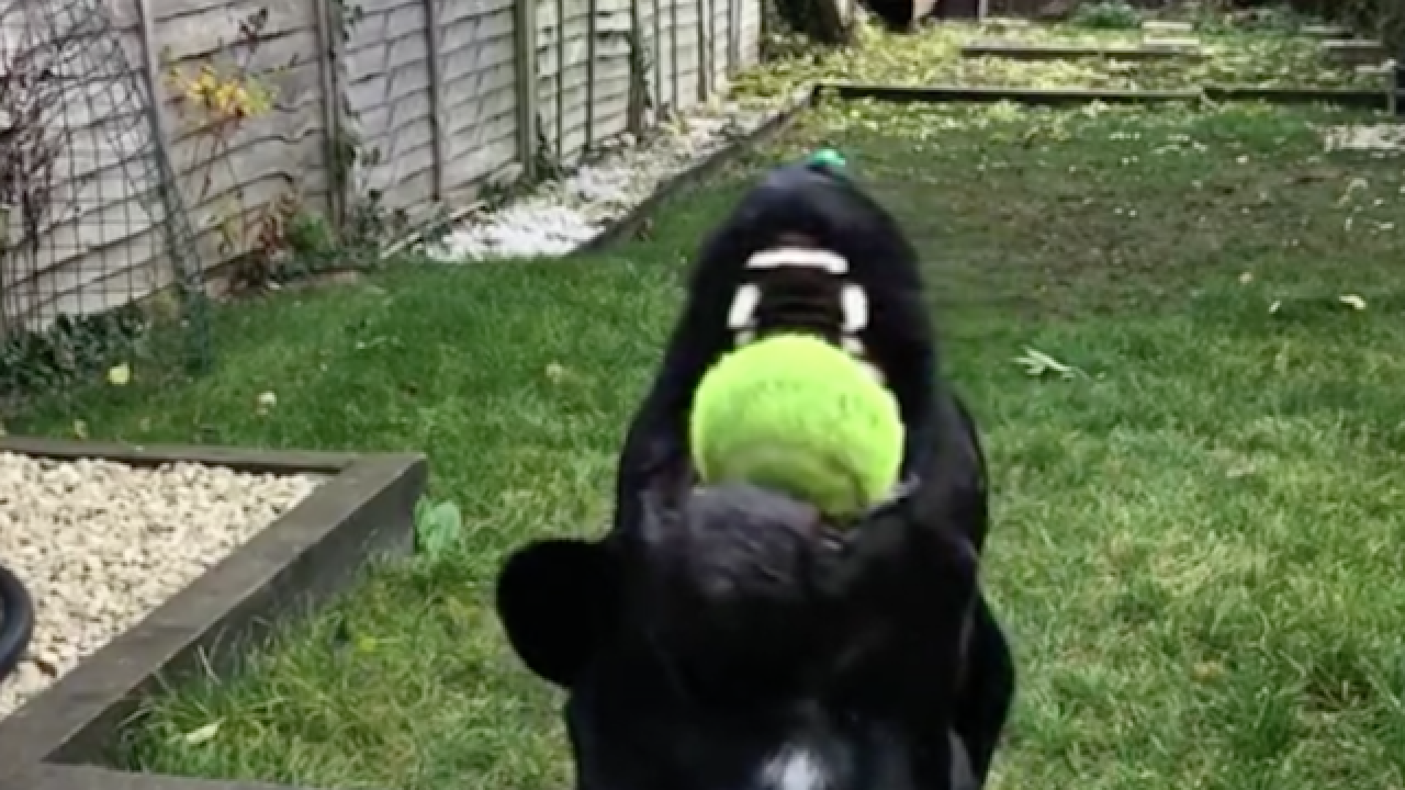 Dog does amazing trick in super slow motion