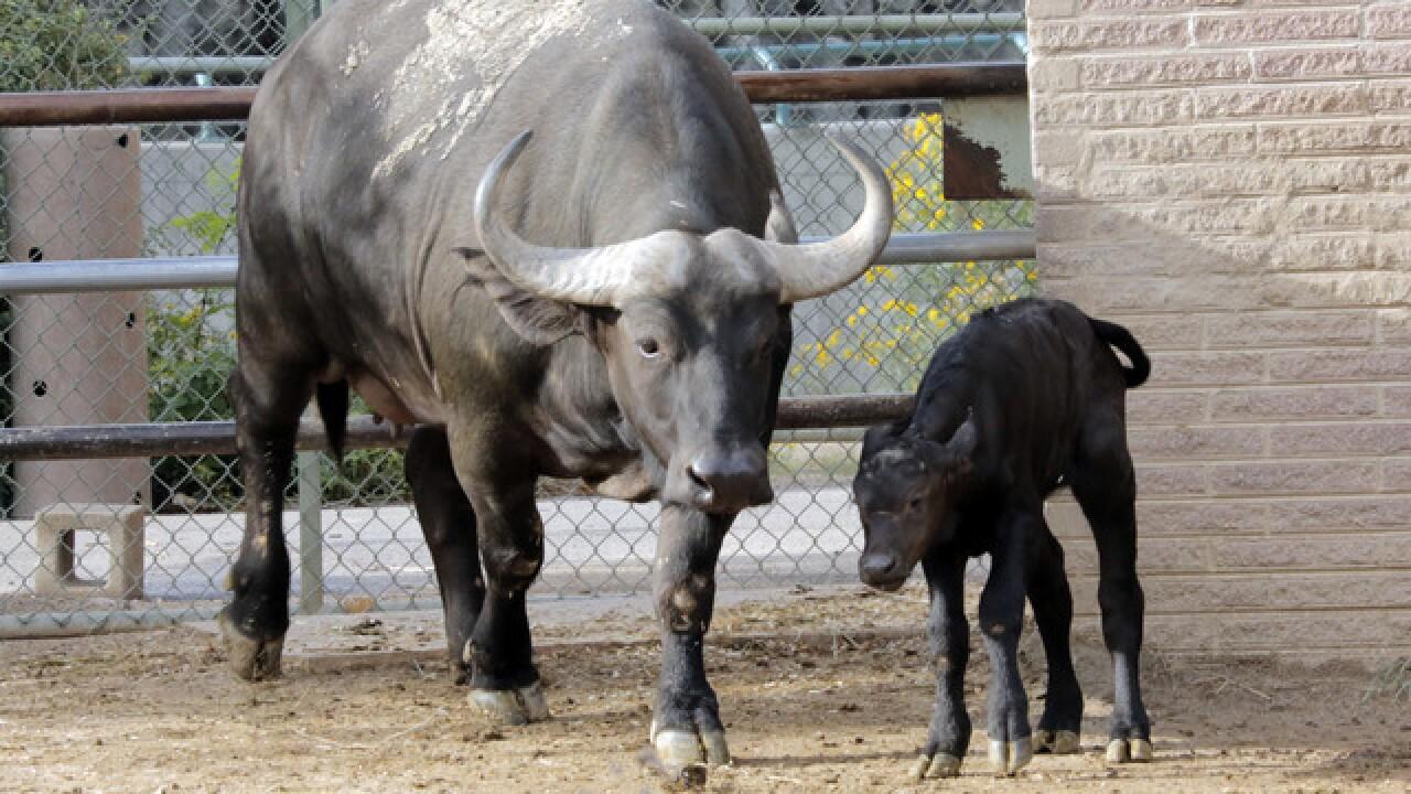 Denver Zoo welcomes newborns Labor Day weekend