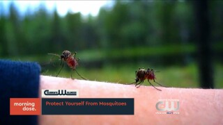 Celebrate Wellness: Protect yourself from Mosquitos