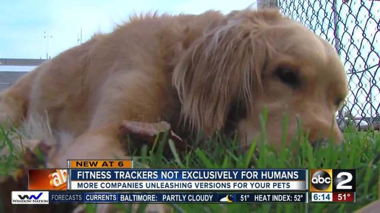 New collars track your pet's fitness activity