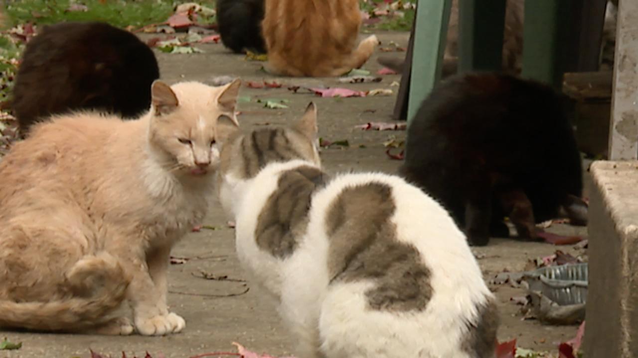 Ashtabula feral cats