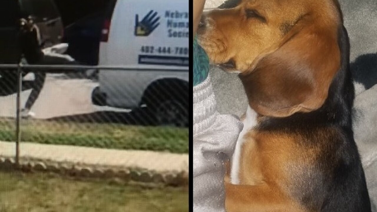 Stolen Omaha beagle found in great shape