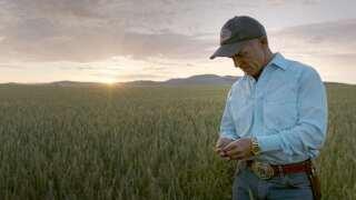 The Farm   Wheat Montana   Under the Big Sky