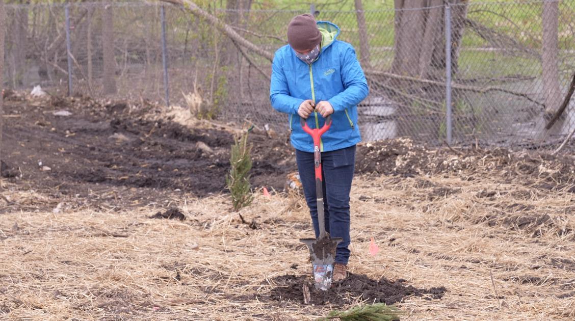 Community members plant 75 trees in Bath