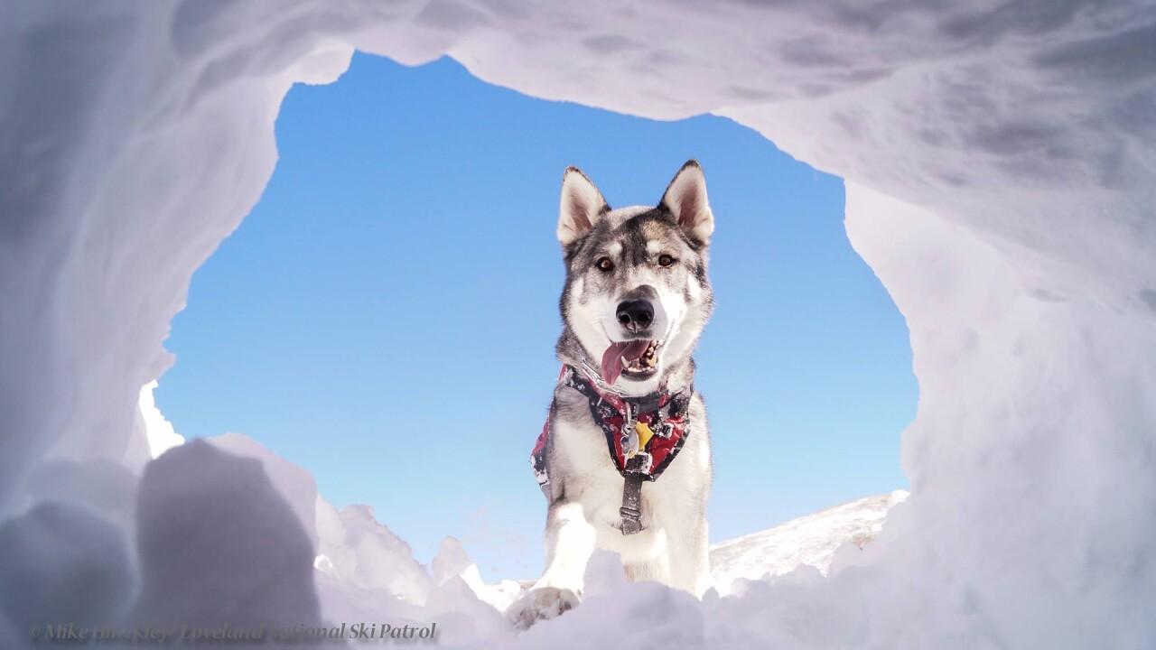 Zuma Loveland Ski Patrol Dog.jpg