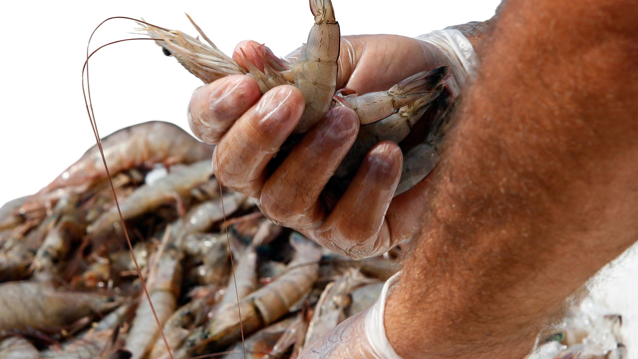 Global stores sell shrimp peeled by slaves