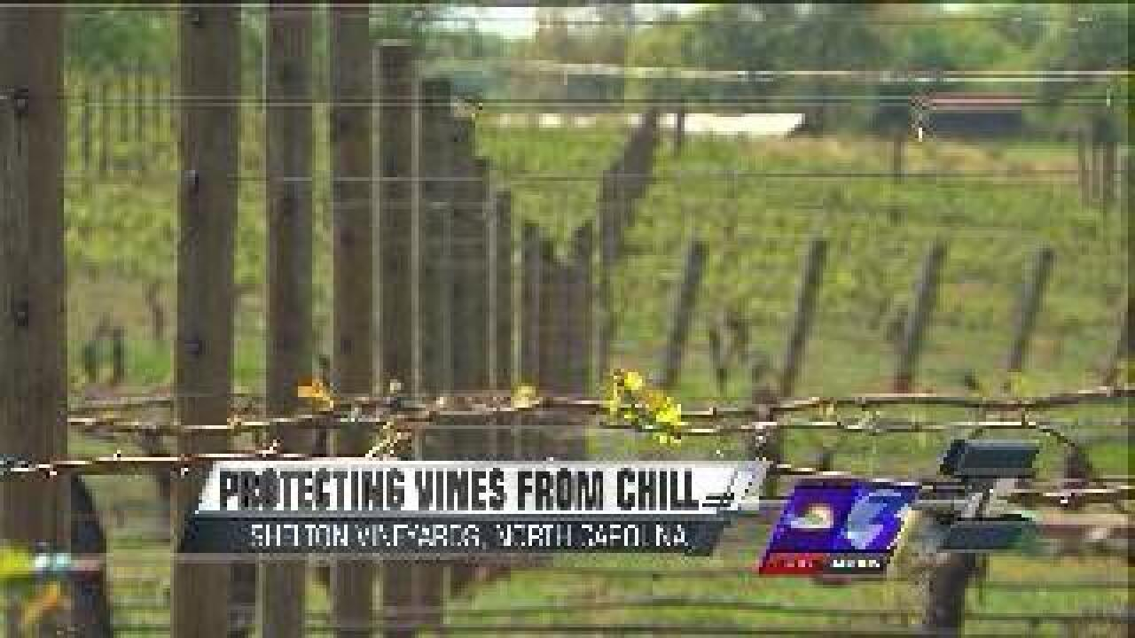 Vineyards use wind to protect grapes and vines