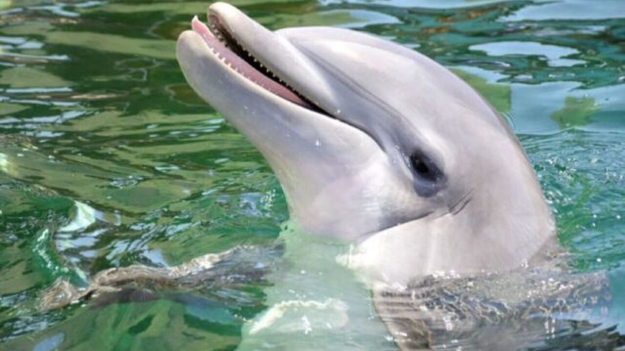 Cause of death for Dolphinaris dolphin released