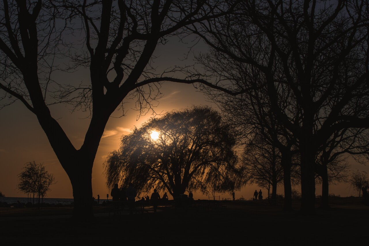 The Weeping Willow stands out as the sun goes down over the horizon.