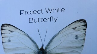 Project White Butterfly