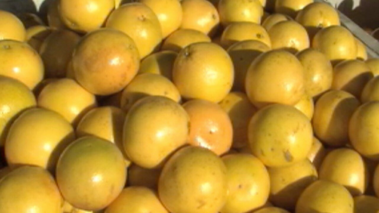 Citrus industry looks for big recovery one year after Irma