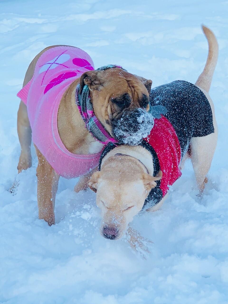 snow pups 13.jpg