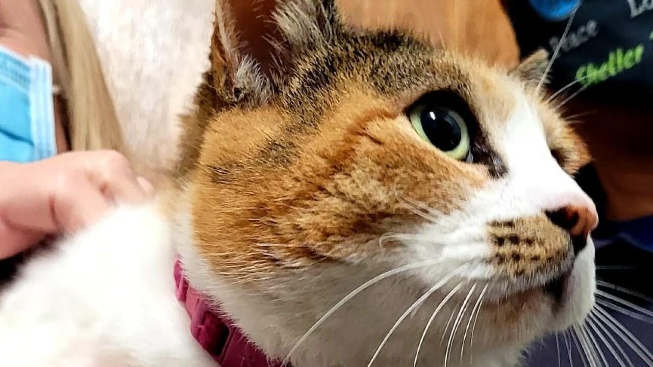 BAJA cat.jpg