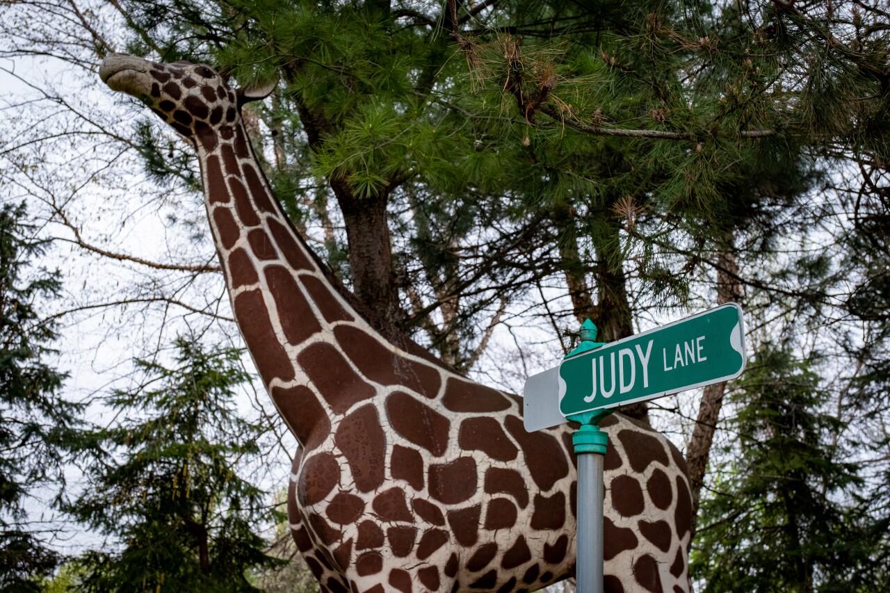 Hidden Gems - Judy's Jungle 3.jpg