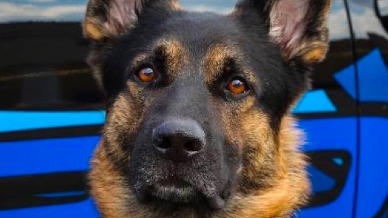 Detroit-area officers kill man who fatally shot police dog