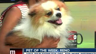 Meet our 23ABC Pet of the Week, Reno!