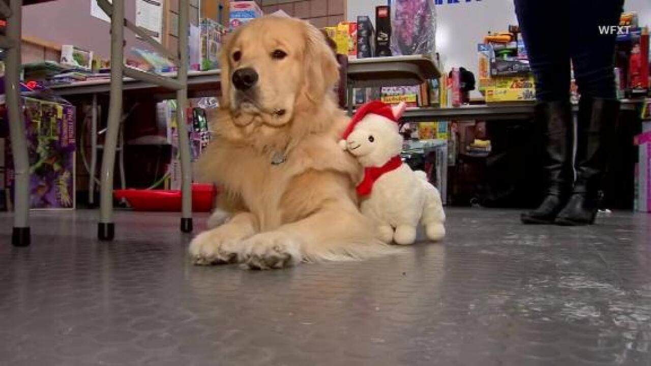 Police therapy dog caught hoarding charity drive toys