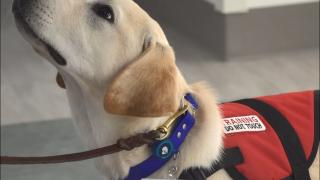 service dog.PNG