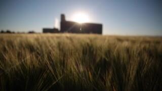 Anheuser Busch Barley 4.jpg