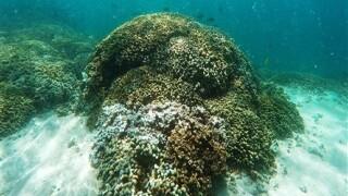 NASA takes 23,000-foot view of coral reefs