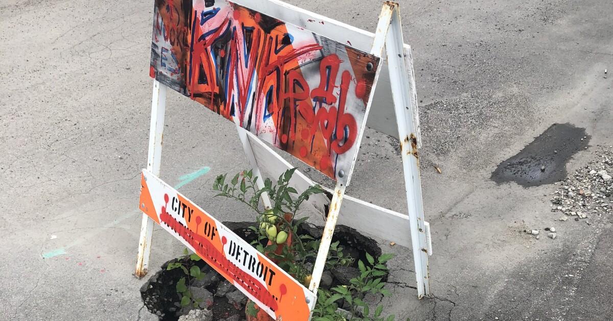 Tomato plant growing inside giant Detroit pothole
