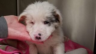Puppy is recovering after tossed in Kentucky trash can.